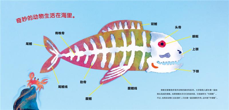 心喜阅绘本馆:海洋动物的骨骼(精装)