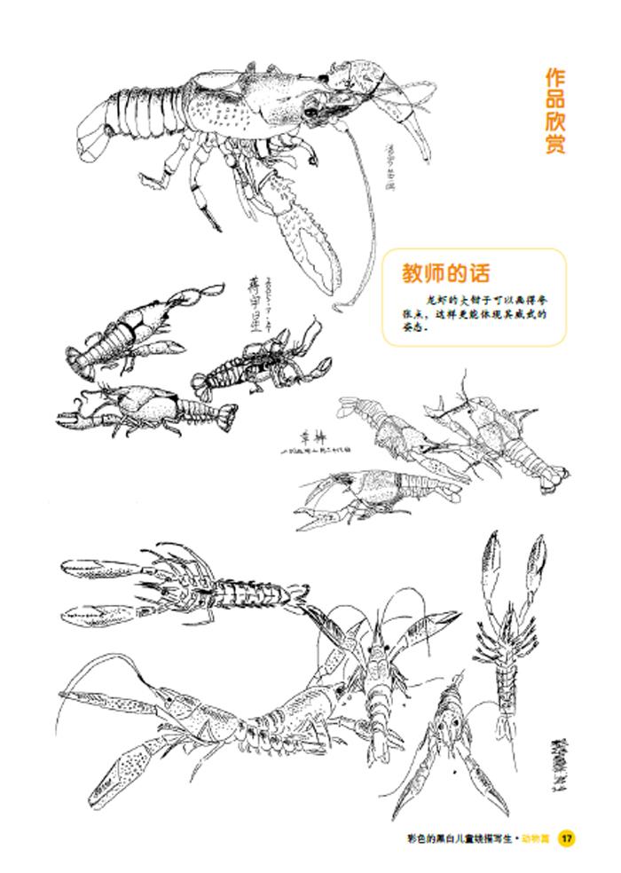 彩色的黑白-儿童线描画写生-动物篇